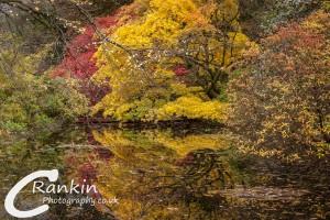 Benmore Gardens Pond